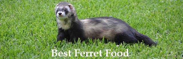 best ferret food guide