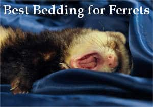 best bedding for ferrets reviews