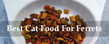 best cat food for ferrets reviews