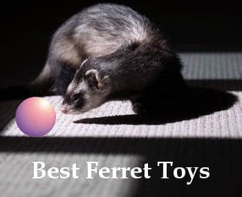 best ferret toys reviews