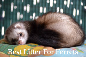 best litter for ferrets reviews