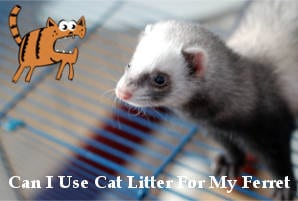 best ferret litter for odor control reviews