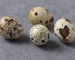 ferrets eat quail eggs